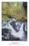 Tish Creek.jpg
