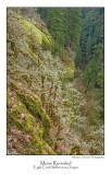 Moss Revealed.jpg