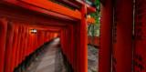 Convergent paths at Fushimi-Inari
