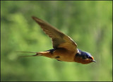 Contact with Swallow Mother