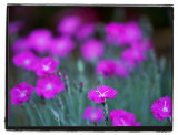 floral flock