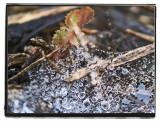 aqueous orb on silken web