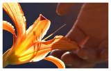 flower sun touch