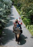 Nongnooch Tropical Garden                      (สวนนงนุช)