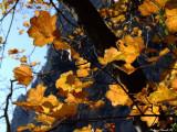 Fall colors 3