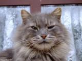 What a cat