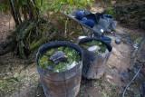 Laos - Cotton Dyeing with Indigo - Lanten village of Ban Nam Lue, Luang Namtha