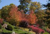Buzzed Fall