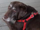 DSCF3163 Sweet Old Girl