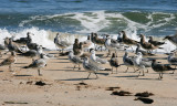 1299 Gull Convention