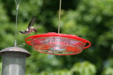 Birds and Sugarwater