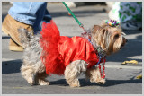 2007 Barkus Pet Parade - St. Louis Mardi Gras