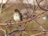 Sparrow White Th 12-06b.JPG
