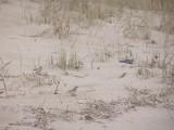Bunting Snow 1-07b 1st landing VA
