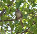 Sparrow White Th 4-07 a.JPG