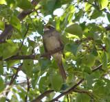 Sparrow White Th 4-07 b.JPG