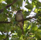 Sparrow White Th 4-07 c.JPG