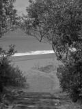 Path to the beach 3593bw