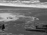 A beachcomber  3620bw