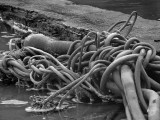 Kelp and driftwood 3653bw