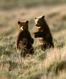 Twin Teddy Bears