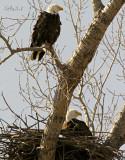 Mister & Mrs Eagle