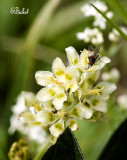 Flies on the Tundra