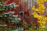 Tangled Garden, Grande Pre, Nova Scotia