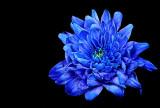 Rhapsody in Blue...