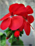 Macro Red.jpg