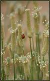 Luck be a Ladybug.jpg