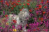 Colour Vision.jpg