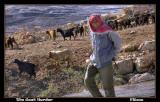 The Goat Herder.jpg