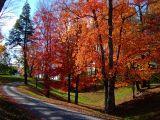 Colorful Lane