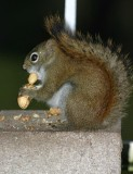 Norman's Perfect Peanut