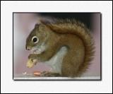 His Special Peanut