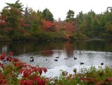 Local Duck Pond