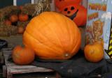 City Pumpkin Patch