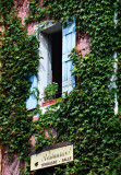 Window With Ivy, Roussillon