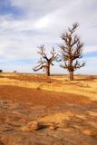 The Two Baobabs near Daga