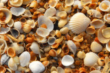 Seashells, Grand Popo, Benin