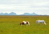 Horses on mainland Iceland with the Westmann Islands in the distance