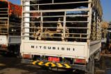 Trucks bringing livestock to market, Nizwa