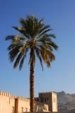 Palm tree, Nizwa