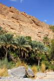 Palm oasis, Wadi Bani Awf