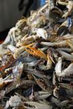 Crabs, Marché Kermel