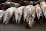 Fish, Marché Kermel