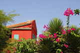 Tropical flowers and well kept building, Île de Gorée