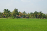 Green fields on the road to Vientiane