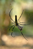 Spider, National Ethnic Cultural Park